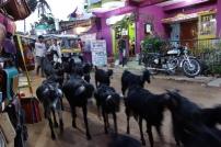 India 2012 (134)