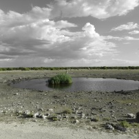 Waterhole edit